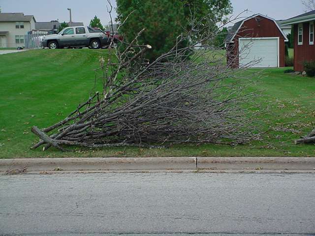 Informational purpose: brush is properly stacked in one direction parallel to the street within 5' of the curb