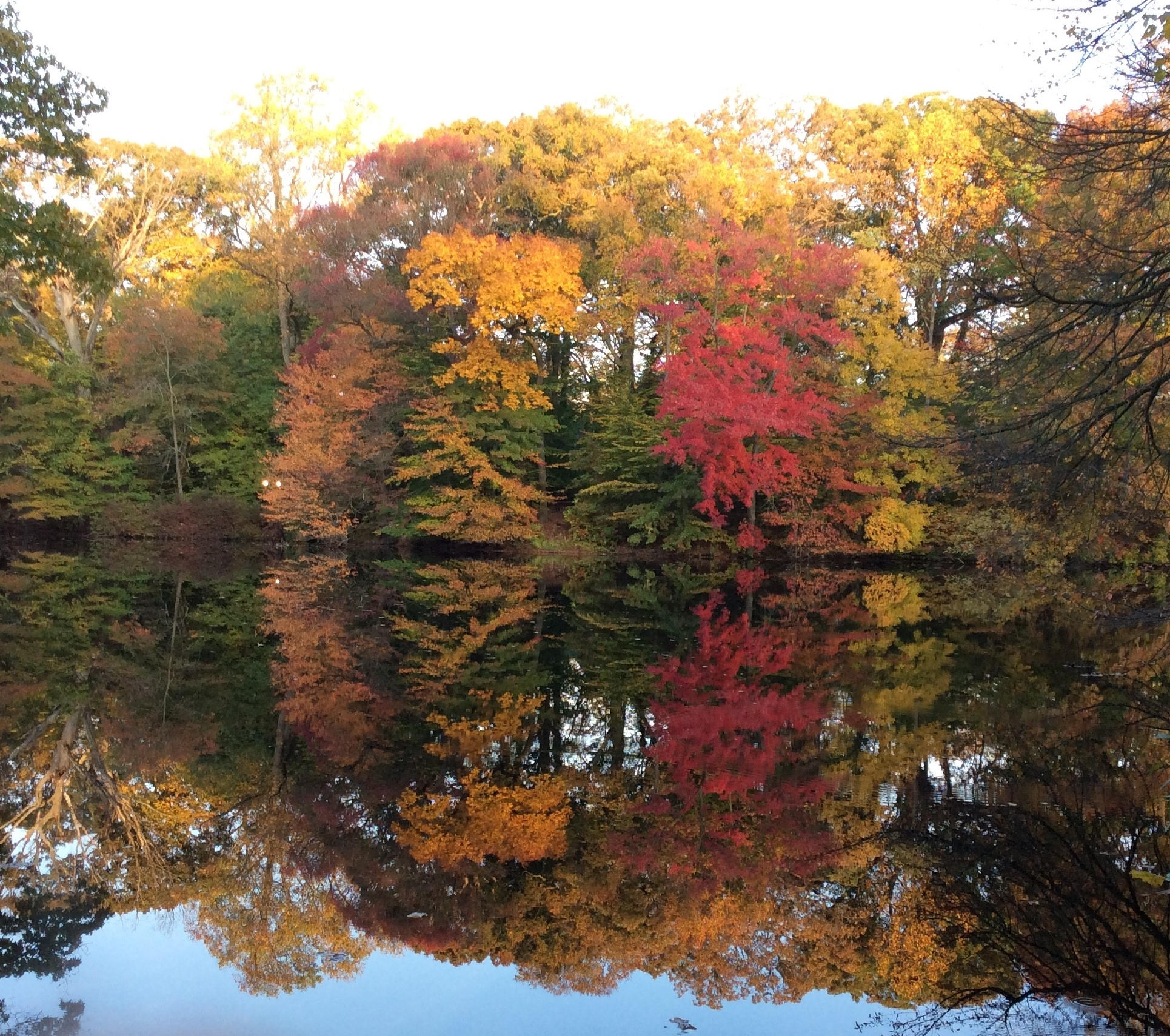 2016 Autumn on Hopkins Pond - Mary Previte