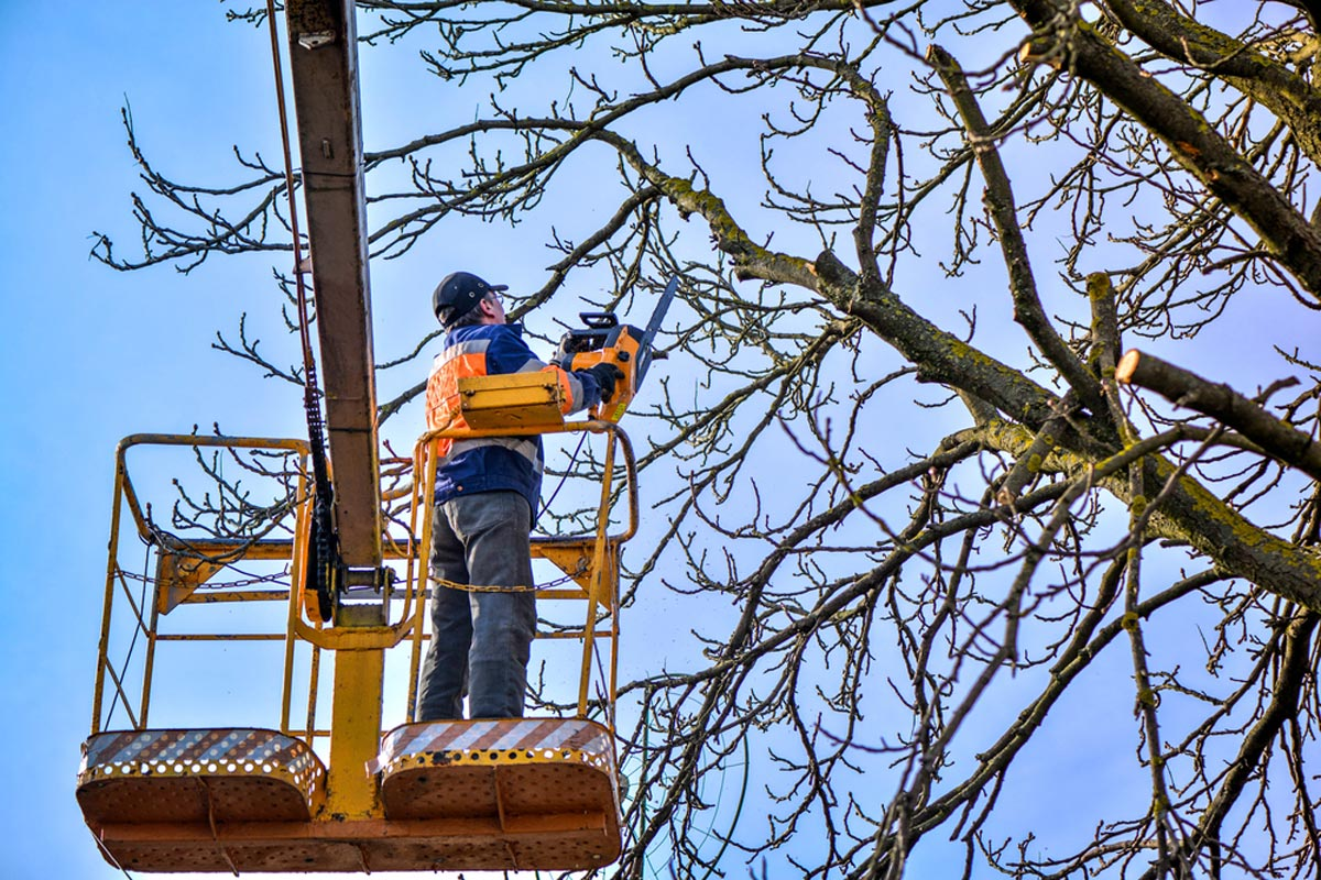 Tree trimming image